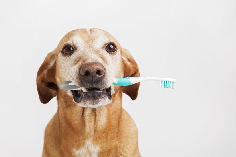 กำจัด กลิ่นปาก ของสุนัข
