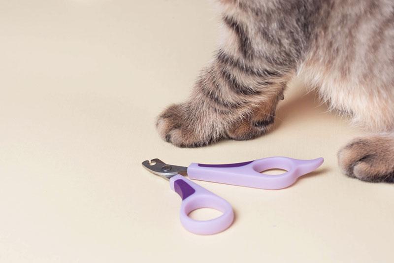 เทคนิคการตัดเล็บแมว