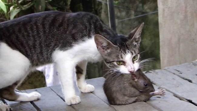 แมว สัตว์เลี้ยงน่ารัก