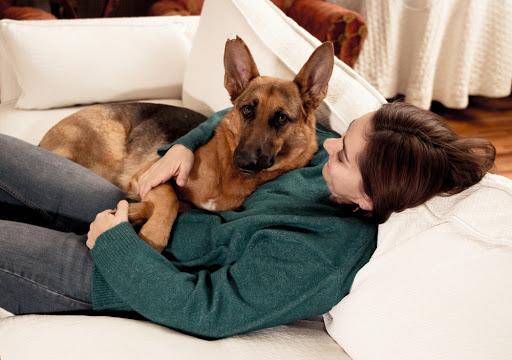 สุนัขบอกรักเจ้าของ รักกัน