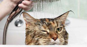 อาบน้ำให้สุนัข และแมว เมื่อฤดูหนาวมาเยือน