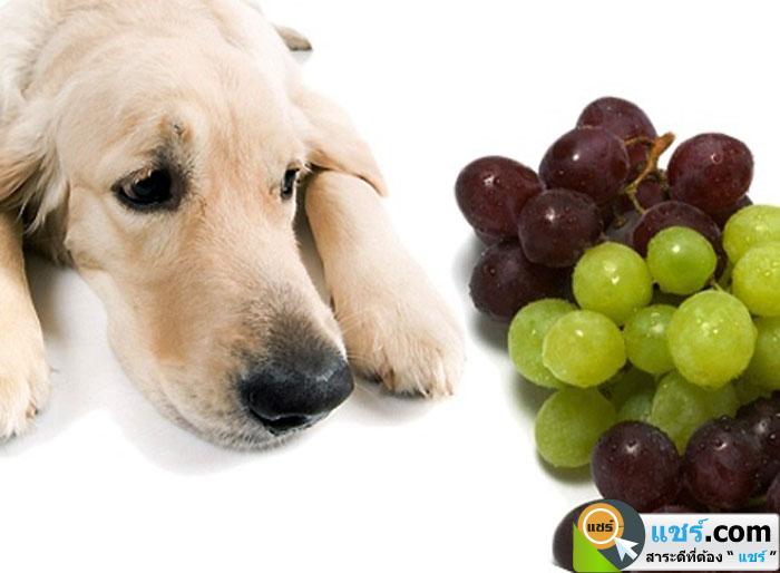 อาหารที่สุนัขควรหลีกเลี่ยง ห้ามรับประทาน