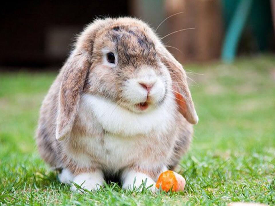 โรคที่เกิดขึ้นกับ กระต่าย