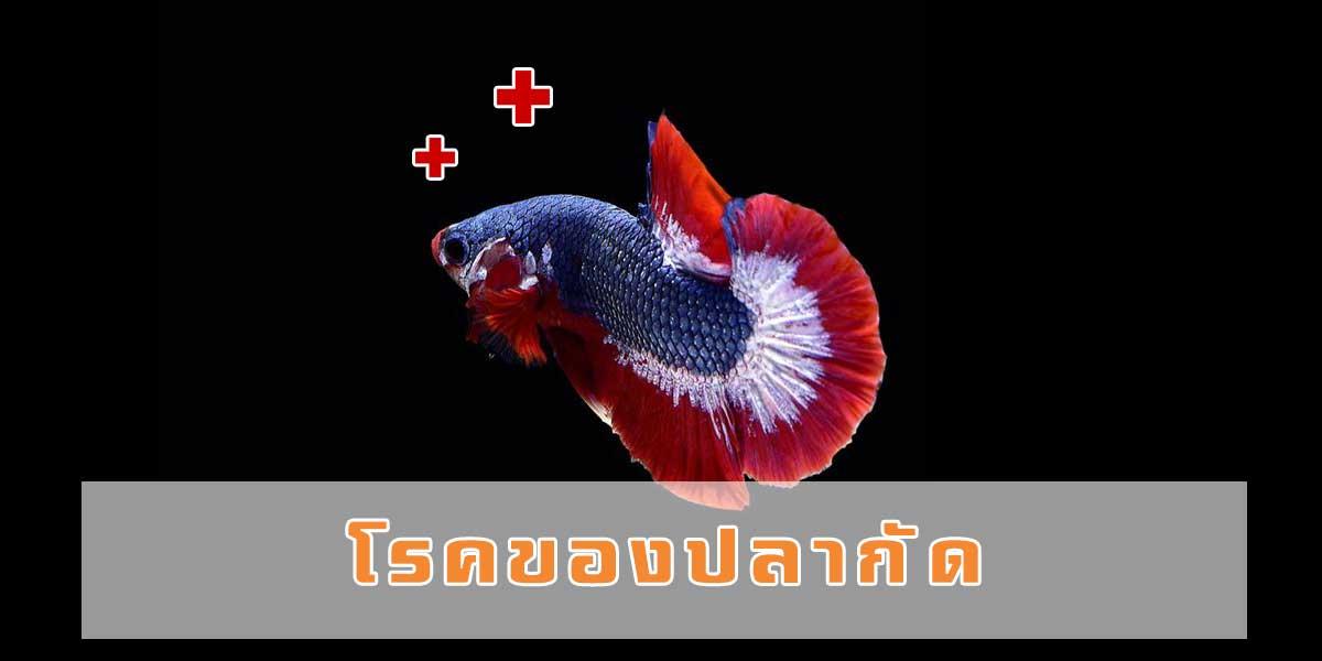 โรคของปลากัด