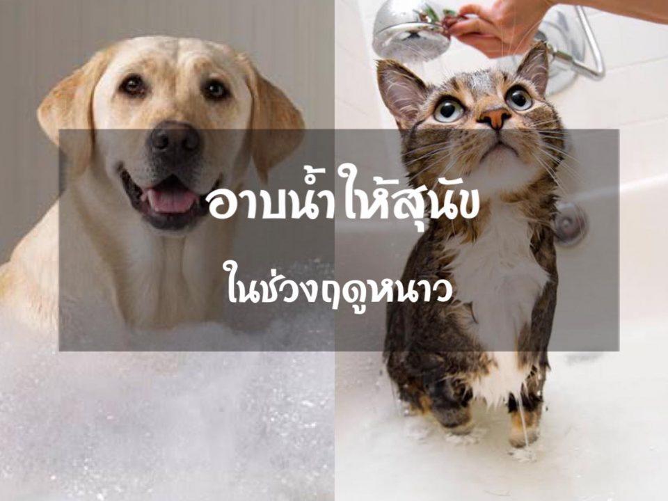อาบน้ำให้สุนัข และแมวในช่วงฤดูหนาว