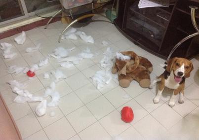 พฤติกรรมของสุนัข