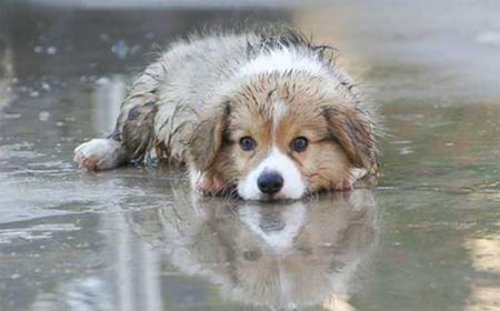 โรคผิวหนังที่เกิดขึ้นกับสุนัข