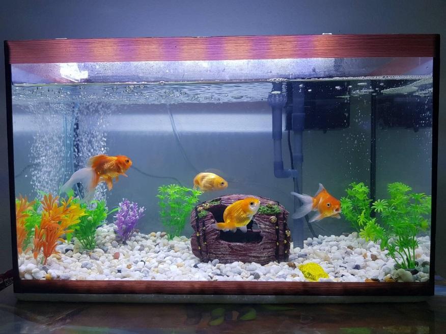 พื้นฐานของการเลี้ยงปลา ที่ถูกวิธี นั้นก็คือ คุณภาพของน้ำ  ที่ใช้ในการ เลี้ยงปลา โดยน้ำที่ใช้ในการเลี้ยงปลาทุกชนิดนั้นต้องปราศจาก คลอรีน