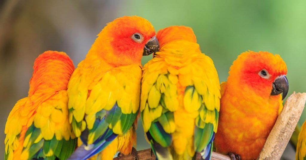สายพันธุ์นกน่าเลี้ยง สายพันธุ์นกเลิฟเบิร์ด  หรือมีชื่อภาษาอังกฤษว่า Lovebird เป็นนกสายพันธุ์ที่มีสีโดดเด่นเป็นเอกลักษณ์ มีลักษณะตัวที่เล็ก
