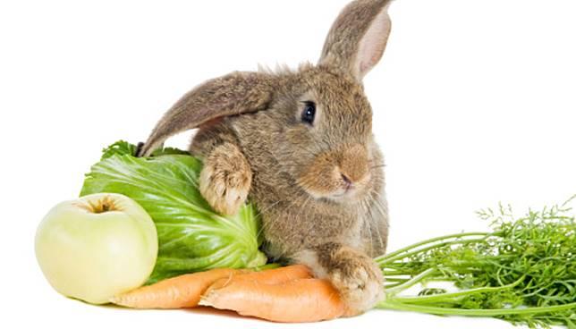 การเลี้ยงกระต่าย ก็จะต่องรู้ว่า ยังมีพืชผักบางชนิดที่ไม่เหมาะสมอย่างยิ่งที่จะนำมาให้กระต่ายกิน เช่น ผักตบชวา หนอกล้วย ลำต้นบอน
