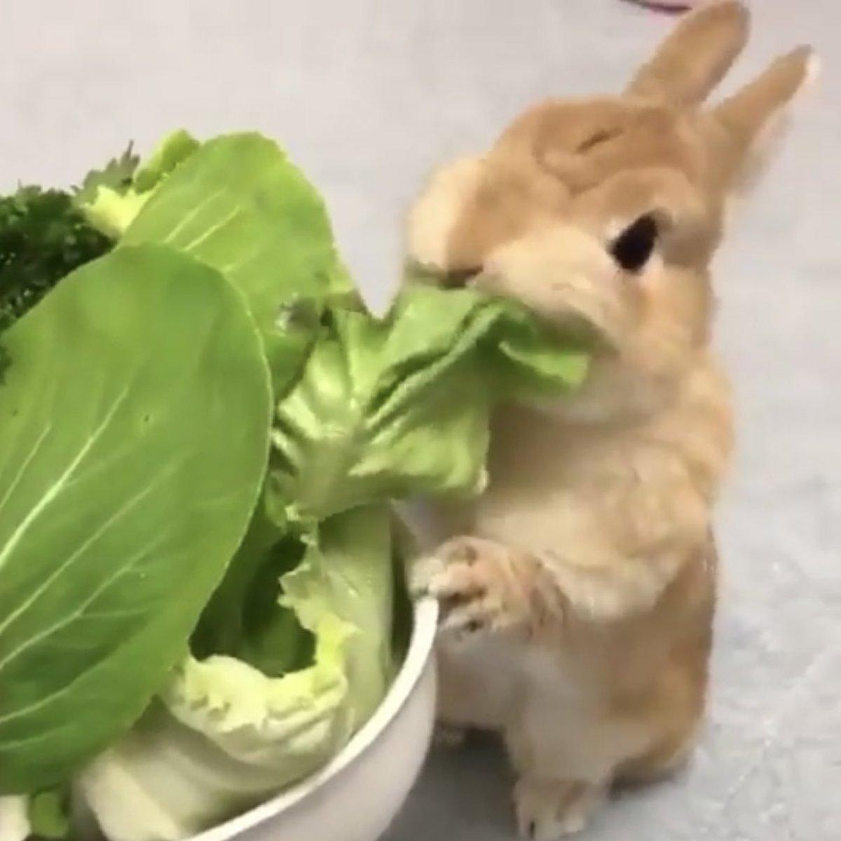 อาหารกระต่าย