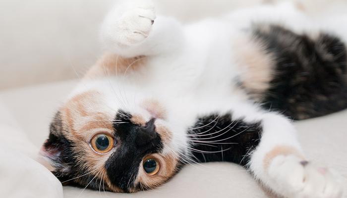 พฤติกรรมของแมว ที่เจ้าของต้องรู้