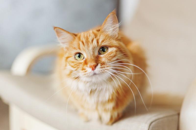 พฤติกรรมของแมว ที่ชอบตาม เจ้าของเข้าห้องน้ำ ขี้สงสัย อยากรู้อยากเห็นของแมว
