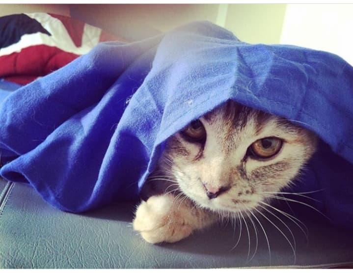 พฤติกรรมของแมว ที่เชื่อว่าเกิดขึ้นกับทาสแมวทุกคน แมวเดินเข้ามาคลอเคลียที่ขา ถู ๆ ไถ ๆ