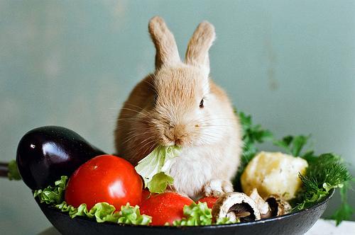 การเลี้ยงกระต่าย จะต้องรู้ก่อนว่า กระต่ายกินอะไร? ไม่กินอะไร?