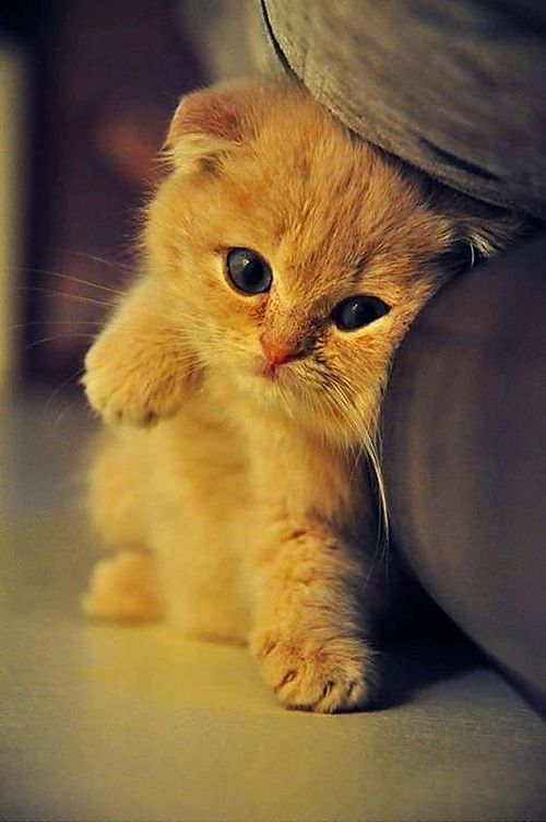 ความพร้อมในการเลี้ยงแมว ไว้ก็จะเป็นเรื่องที่ดี เพราะเป็นการเลี้ยงสัตว์ที่ไม่เป็นการทรมานสัตว์
