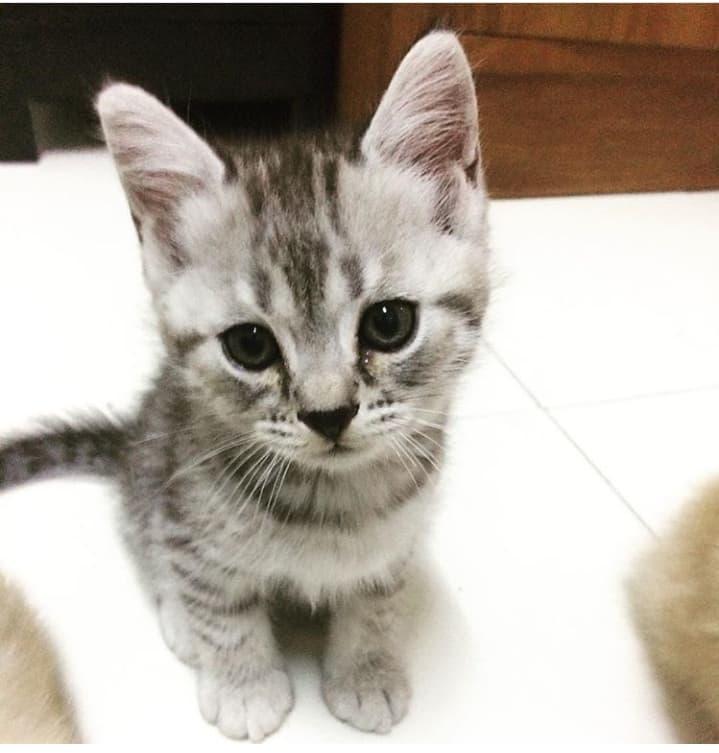 พฤติกรรมของแมวที่ขี้สงสัย อยากรู้อยากเห็น เมื่อเจ้าของทำกิจกรรมต่าง ๆ ในห้องน้ำ น้องแมวก็จะชอบตามไปดูคุณทุกที