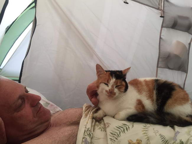 พฤติกรรมของแมว แมวจะชอบนอนหลับบนอกของเรา