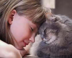 พฤติกรรมของแมว ที่แมวชอบมาดมกลิ่นที่หน้าของเรา