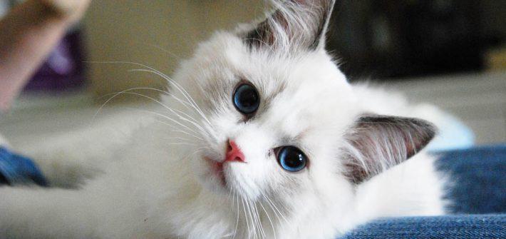 ความพร้อมในการเลี้ยงแมว และเรื่องของปัจจัย 4  ให้พร้อมก่อนการเลี้ยง