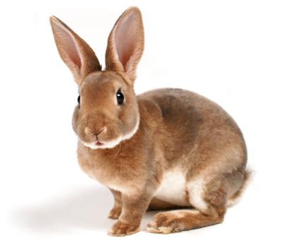 กระต่ายเป็นสัตว์เลี้ยงที่กำลังได้รับความนิยมในปัจจุบัน เพราะด้วยความน่ารักน่าเลี้ยง