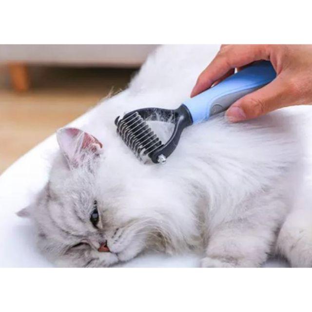 การแปรงขนแมว เป็นกิจกรรมที่สร้างความสัมพันธ์ระหว่างคนกับแมวได้ดีทีเดียว