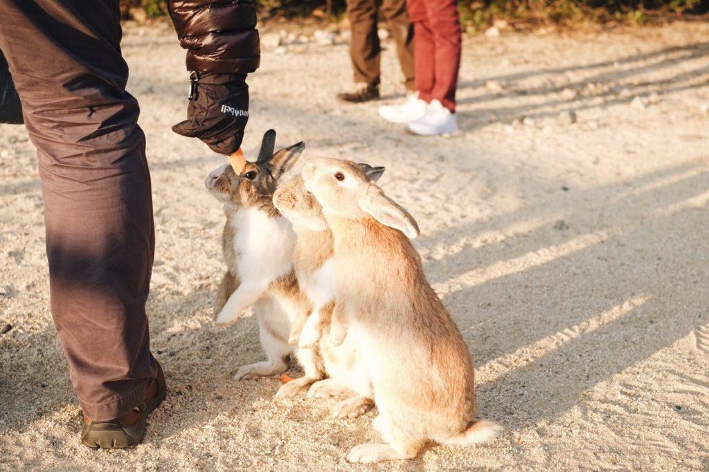 กระต่ายนั้นมีหลายสายพันธุ์ แต่ที่เป็นที่นิยมนำมาเลี้ยงก็จะมีสายพันธุ์ ไทย , ฮอนแลนป์ลอป , มินิเร็คซ์ , เนเธอแลนดวอฟ