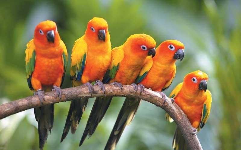 สายพันธุ์นกที่เป็นที่นิยม น่าเลี้ยง