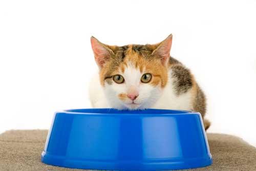 อาหารหลักของแมวที่ขาดไม่ได้ทาสแมวต้องมีไว้