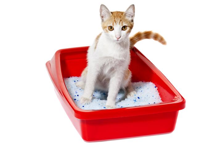 """ทรายแมว"""" ผลิตภัณฑ์เพื่อแมว"""