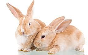 ตรวจเช็ดความพร้อมก่อนเลี้ยงกระต่าย