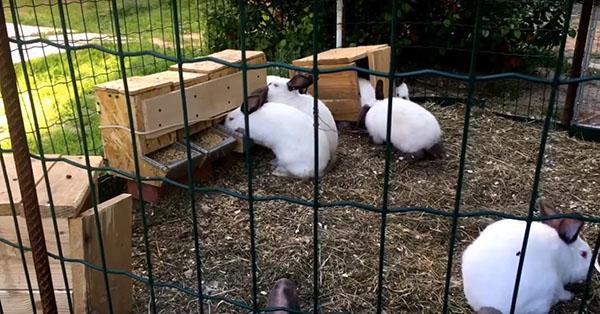 การเลี้ยงกระต่ายนั้น ควรตั้งกรงไว้ในที่ที่มีอากาศถ่ายเทได้ดี เพราะ กระต่าย เป็นสัตว์ที่ไม่มีรูขุมขน แถมยังมีคนปกคลุมหนา