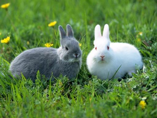 กระต่ายน้อยน่าเลี้ยง