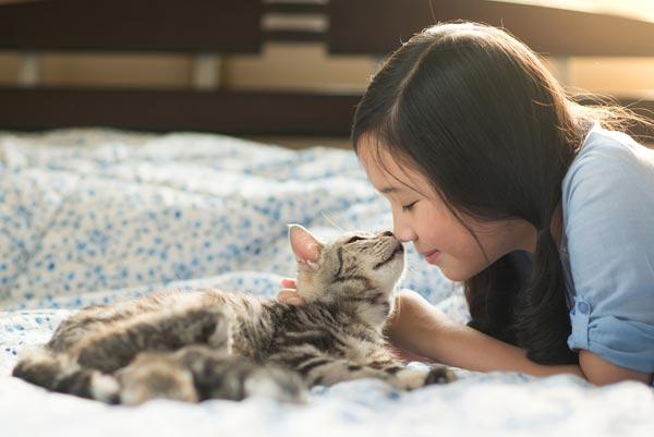 การเลี้ยงแมว เป็นสัตว์เลี้ยงที่น่ารัก