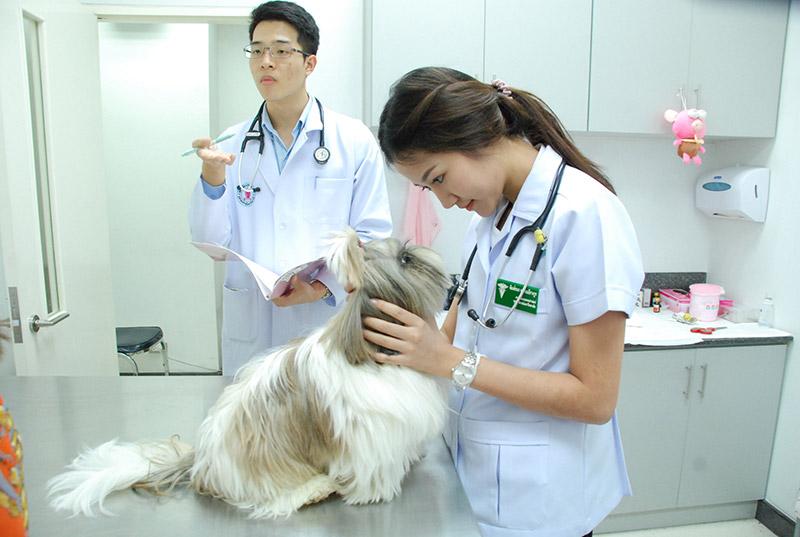 สัตวแพทย์ เทวดาของสัตว์ตัวน้อย รักษาสัตว์ ทำการรักษาอาการป่วยของสัตว์ต่างๆ