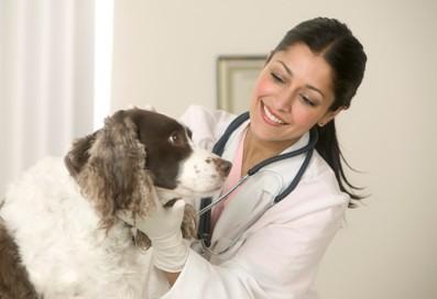 สัตวแพทย์ เทวดาของสัตว์ตัวน้อย อาจจะเป็นอาชีพที่ใครหลายๆคนใฝ่ฝัน เป็นอาชีพที่อยู่ใกล้ชิดกับสัตว์