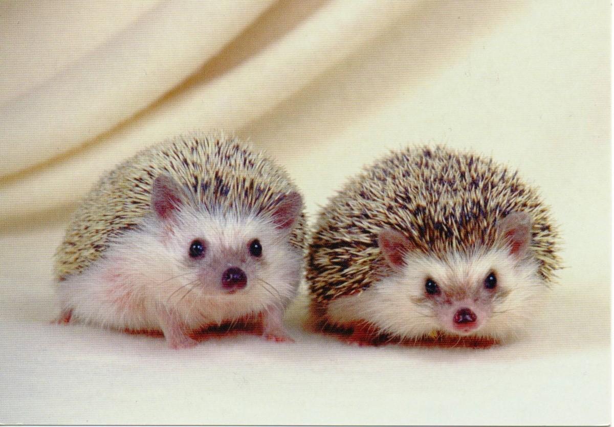 สัตว์เลี้ยงยอดนิยมของคนญี่ปุ่น สร้างความน่ารักให้กับคนเลี้ยง