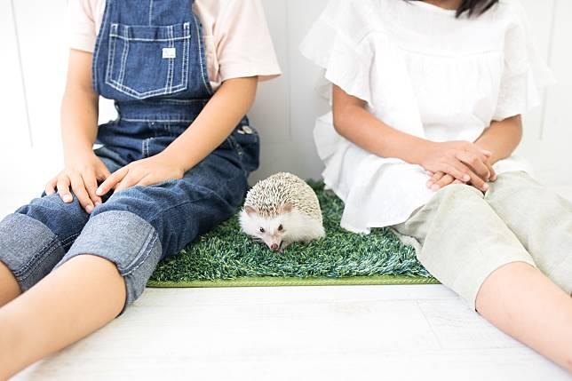 สัตว์เลี้ยงยอดนิยมของคนญี่ปุ่น ที่สร้างความน่ารักและสดใสให้กับคนเลี้ยง