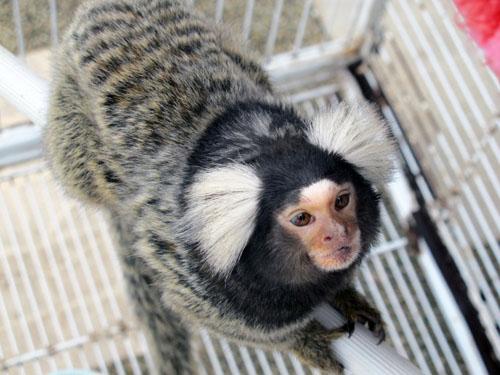 สัตว์เลี้ยงไซส์เล็ก ที่มากับความน่ารัก มีทั้งความแปลกแต่เป็นสัตว์เลี้ยงที่ไซส์เล็ก