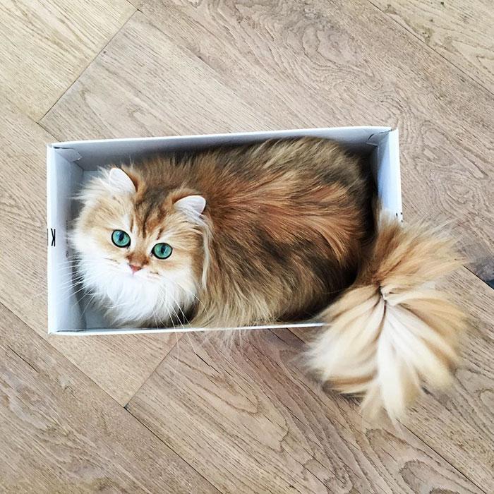 แมวสายพันธุ์บริติชช็อตแฮร์ นั้นเป็นแมวที่นอกจากจะเป็นแรงบันดาลใจในการสร้างภาพยนตร์การ์ตูนตัวการ์ฟิลด์