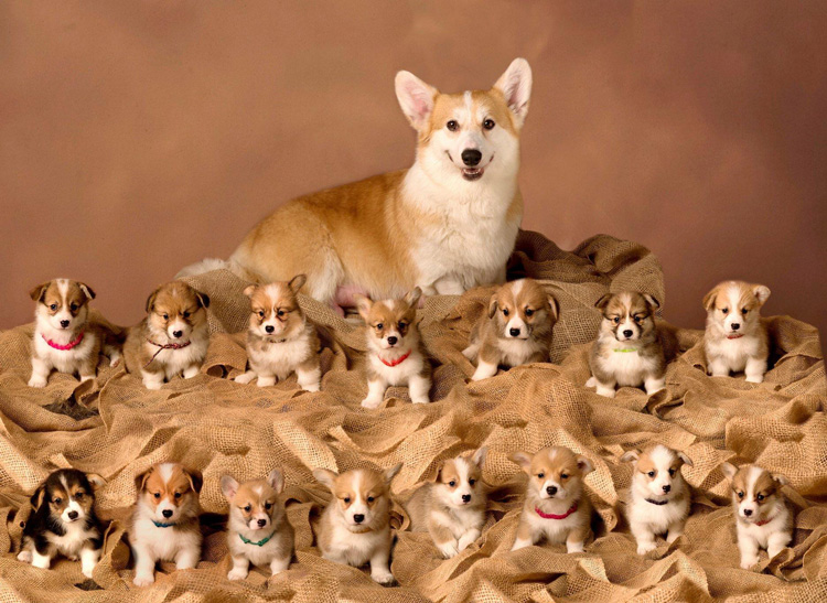 การจำหน่ายลูกสุนัข เป็นอาชีพที่สร้างรายได้