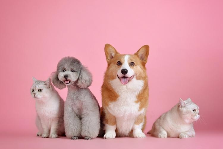 การจำหน่ายลูกสุนัข เพราะการเลี้ยงสุนัขสามารถทำเป็นอาชีพได้