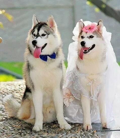 การผสมพันธุ์ของสุนัข ข้อควรรู้ของสุนัขเพศผู้และเพศเมีย