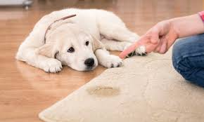 การฝึกสุนัข ฝึกเบื้องต้นคำสั่งที่สี่ คือ การฝึกสุนัขให้คอย