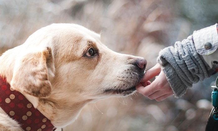 การฝึกสุนัข เบื้องต้น เพื่อฝึกให้สุนัขเป็นสัตว์เลี้ยงแสนรู้