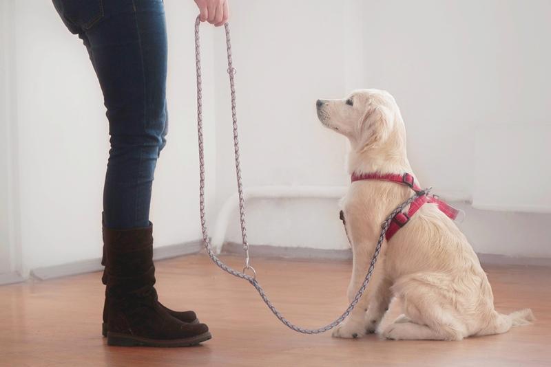 การฝึกสุนัข เพื่อสอนให้สุนัขอยู่ในคำสั่ง