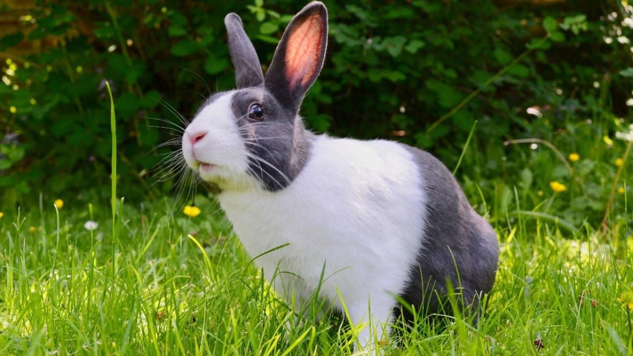 การเลี้ยงกระต่าย สัตว์เลี้ยงน่ารัก