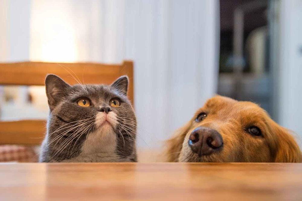 การเลี้ยงหมากับแมว สัตว์ทั้งสองชนิดนี้สามารถเลี้ยงร่วมกันได้