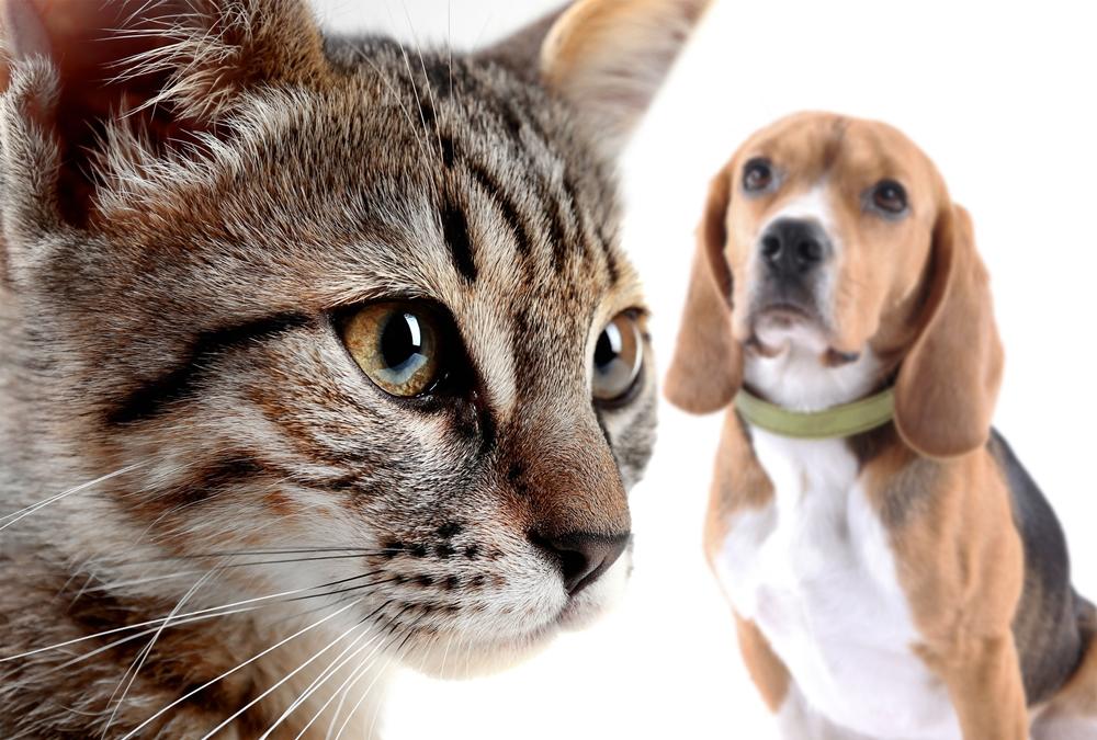 การเลี้ยงหมากับแมว สัตว์เลี้ยงที่มีความต่างกันอย่างสุดขั้วนี่ จะสามารถเลี้ยงร่วมกันได้หรือไม่
