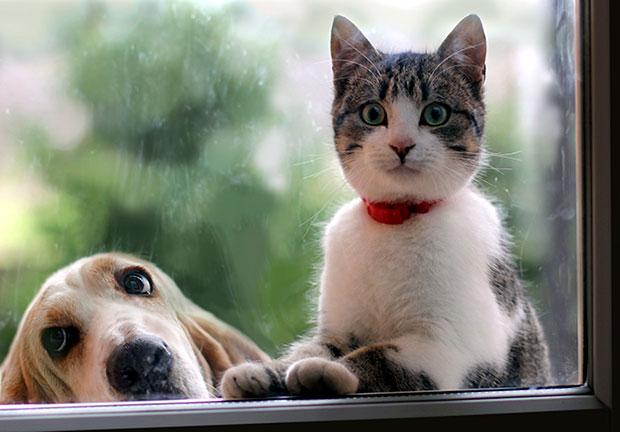 การเลี้ยงหมากับแมว สัตว์เลี้ยงที่เป็นปัญหาหลักในการเลี้ยง